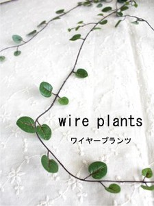 Wire Plants