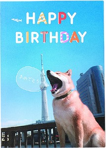 Birthday Shiba Dog Pop Card Blue Sky