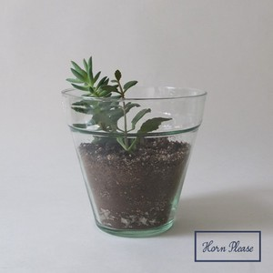 Flower Vase Glass Plan Pot