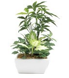 Artificial Plants Pakira