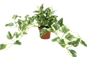Artificial Plants Pothos