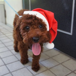 Santa Hat Large / Santa hat for stuffed toys and small dogs!
