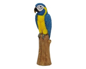 Solid Objects Blue-and-yellow Macaw Small Birds Objects