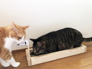 Recycled wood  box for cat scratching & relax
