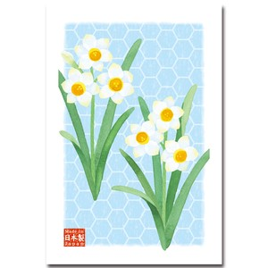 Post Card Pack Narcissus