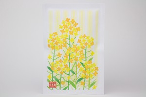 Post Card Pack Rape Blossoms