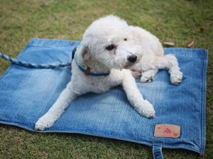 Denim Dog Mat