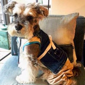 Denim Dog Apron