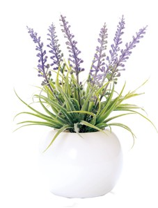 Interior Green Round Pot Lavender