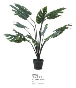 Art Green Monstera