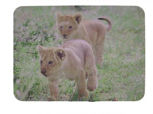 Mouse Pad LION