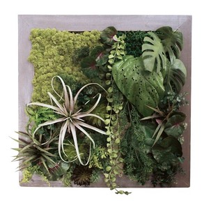 Moss Succulent Frame Square