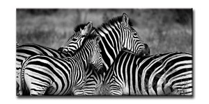 Canvas Art ZEBRA