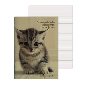 Notebook Photo American Short Cat