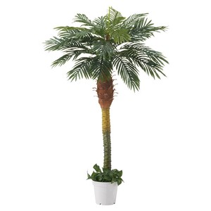 Lux Palm Tree