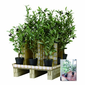 Artificial Plants Olive