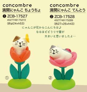 At home Garden concombre Full Bloom Cat