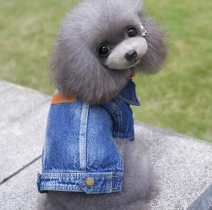 A/W Teddy Small Size Dog Wear Pet Warm Comfort Casual Soft Cat