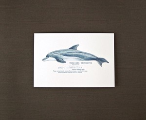 Creature Postcard Hand Dolphin