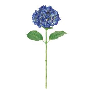 アジサイ ★クラリティハイドレンジア ブルー