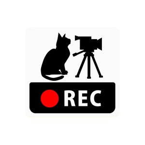 Drive Recorder Sticker Cat Video Camera Square Type Magnet