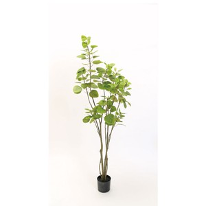 Smoke Tree Pot