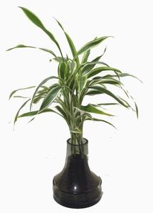 インテリアグリーン ハイドロカルチャー(観葉植物)