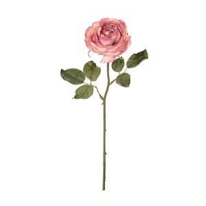 rose Dry Garden Rose Pink Mauve Dry Flower Artificial Flower