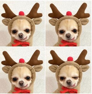 Dog Wear Christmas Dog Pet Pet Product