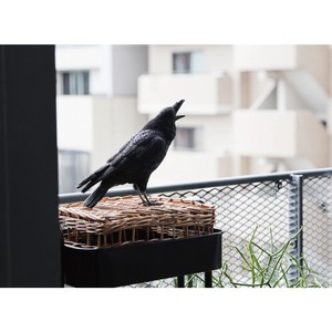 Popular Real Animal Piggy Bank PET BANK Pet Bank Black Crow