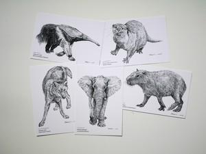 「系統樹マンダラ」ポストカード●人気のカピバラ、アフリカゾウ入り●生き物の細密画5枚セット