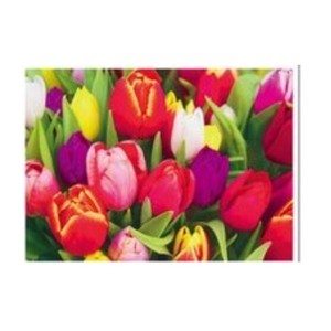 Postcard Flower Photography Germany Imports