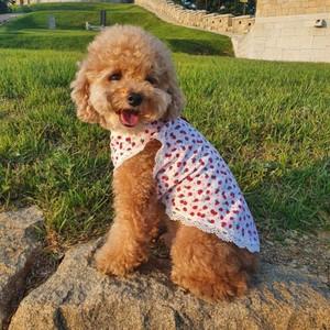 犬服いちご 可愛い キャミソール XS S M L XL 小型犬 服 中型 犬 春 夏 秋 冬 フリル タンク トップ