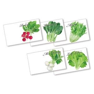 横型イラスト花の種子(野菜)