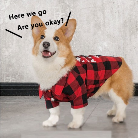 Pet Product Checkered Shirt for Cat Dog Wear cat | Export